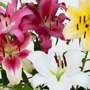 Lilies Orientales